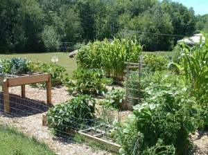 Community Garden in Medford