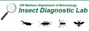 Insect Diagnostic Lab Graphic w Bugs