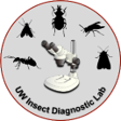UW Insect Diagnosis